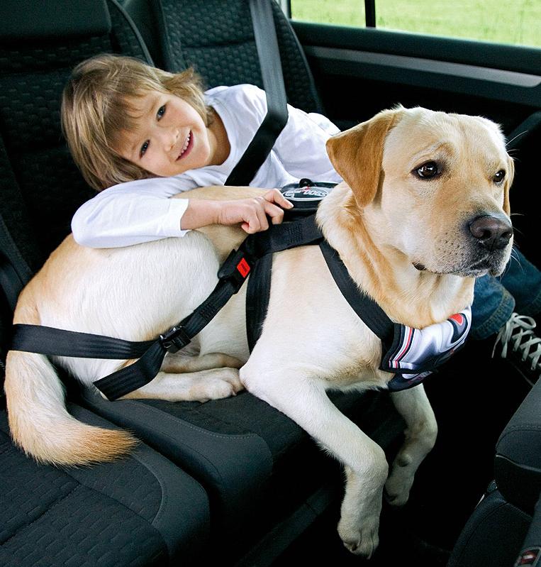 hund-gurt-transportsicherung