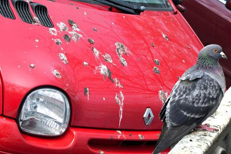 Autos als Zielscheiben für Vögel
