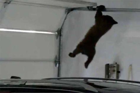Video: Bärenjunges in Garage erwischt