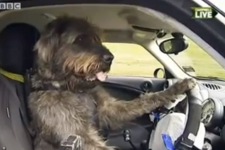 PR-Aktion: Fahrschule für Hunde