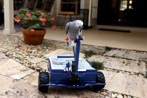 Video: Roboter für Papagei