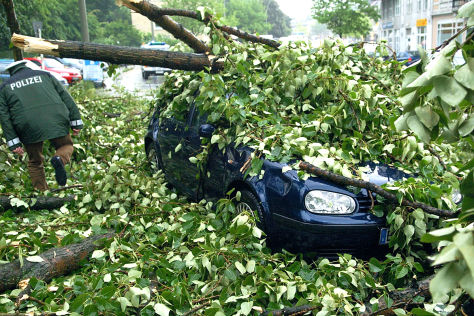 BGH-Urteil: Baum gegen Auto