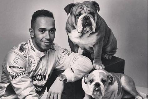 Hamilton & seine Hunde