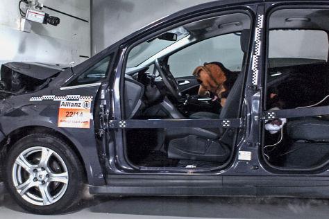 Versicherungs-Versuch: Crashtest mit Hund