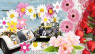 Hochzeits-Autoschmuck