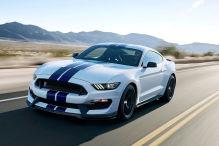 Starker Mustang