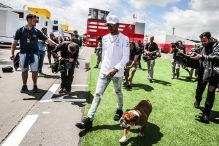 Hamilton bringt Hund Roscoe in die PK