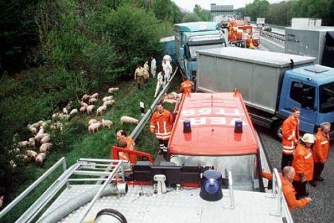Schweinetransporter legte Autobahn lahm