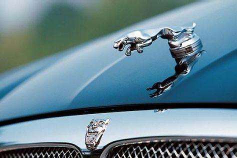 Jaguar-Kühlerfigur