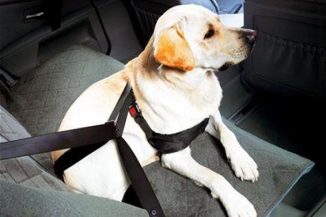 Hunde-Sicherheitsgeschirr von BMW