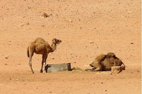 Reisereportage Jordanien