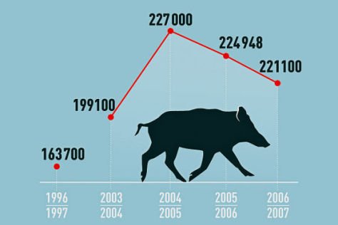 Wildunfall Gefahr Statistik