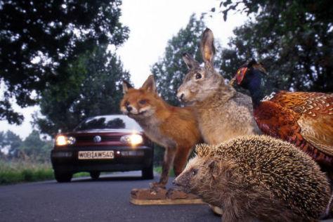 Ratgeber Verkehrssicherheit