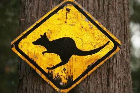 Bei der Rallye Australien kamen weniger Tiere zu Schaden als befürchtet