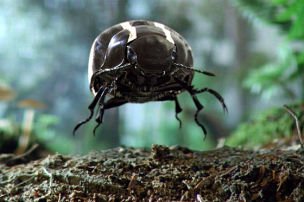 Der neue Beetle kommt