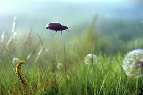 Beetle-Spot