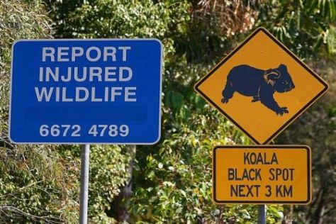 Die Tiere in der australischen Wildnis haben ab 2012 womöglich ihre Ruhe