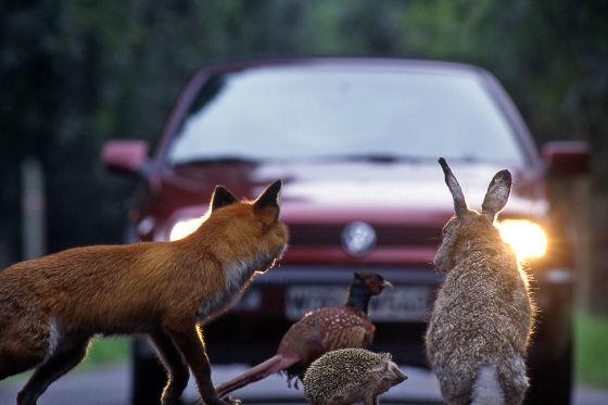 Bambi lebt gefährlich