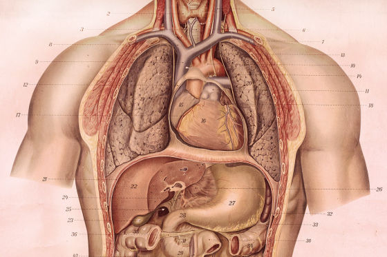 Feinstaub greift Herz und Lunge an