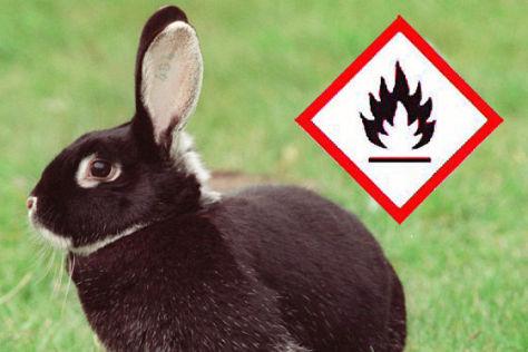 Kaninchen mit R1234yf-Warnhinweis