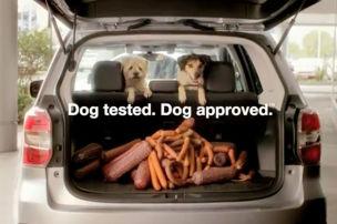 Hunde können nicht irren