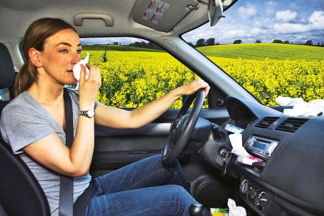 Pollen-Alarm im Auto