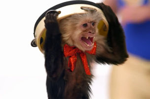 Affen gehen immer