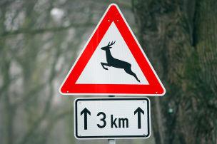 Vorsicht, Wildwechsel!