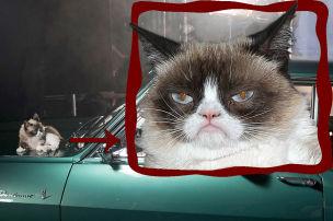 Grumpy Cat für Opel