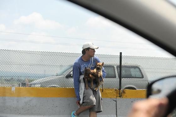 Hundeverkäufer am Straßenrand