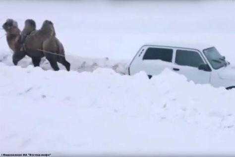 Kurios: Kamel rettet Lada aus dem Schnee
