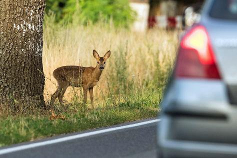 Kfz-Versicherung: Erweiterte Wildschadenklausel