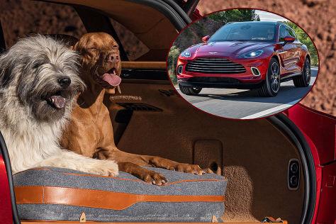 Aston Martin DBX (2019): Haustier-Paket