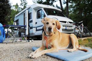 So klappt Camping mit Hund