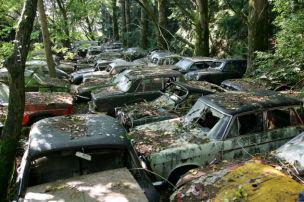 Der Friedhof im Wald