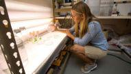 Biosprit aus Algen