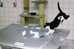 Können Katzenkrallen kratzen?