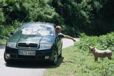 saugut – oder nur schwein gehabt? - autobild.de