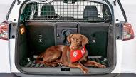 Autofahrt mit Haustieren
