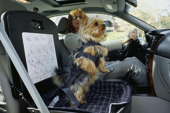 Sichere Autofahrt für Hund und Katze
