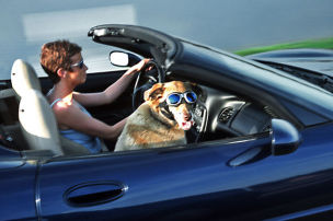 Hund allein auf Reisen