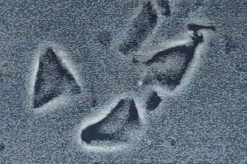 Manche Glaskrümel sind so winzig, dass sie erst unter dem Mikroskop deulich sichtbar werden.