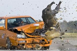 Wildschwein-Crashtest