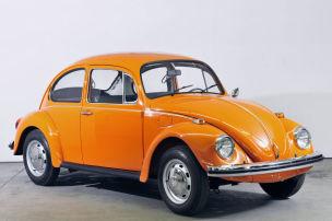 Der Dornröschen-Käfer