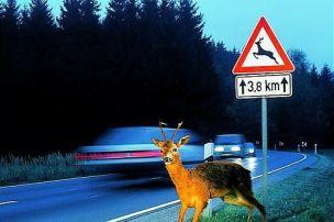 Gefahr aus dem Wald