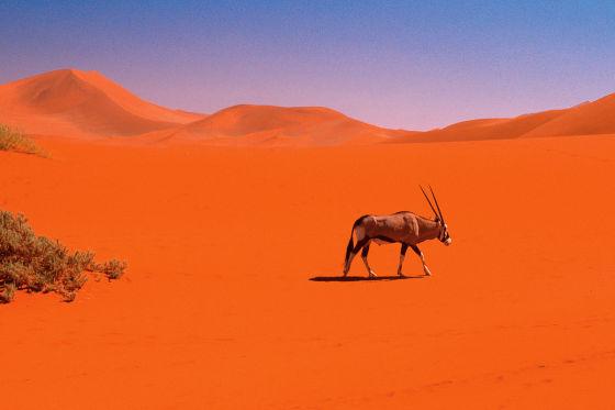 Die Teilnehmer schlugen sich mit dem Skoda Yeti durch die faszinierende Landschaft Namibias.
